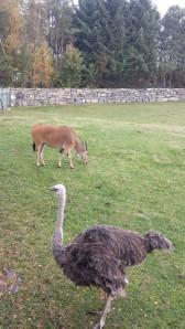 dyreparken høsten 2014 014