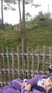 dyreparken høsten 2014 023