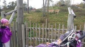 dyreparken høsten 2014 029
