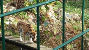 dyreparken høsten 2014 048