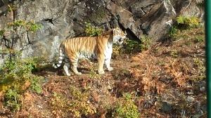dyreparken høsten 2014 051