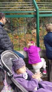dyreparken høsten 2014 053