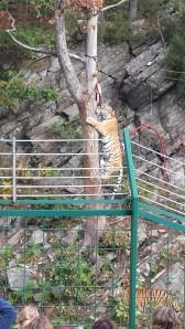 dyreparken høsten 2014 063