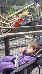 dyreparken høsten 2014 094