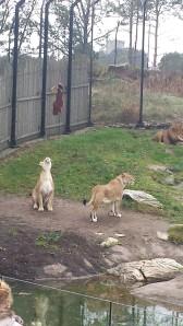 dyreparken høsten 2014 103
