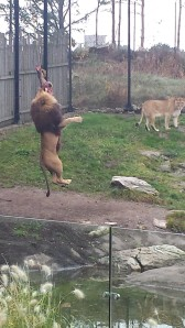 dyreparken høsten 2014 139