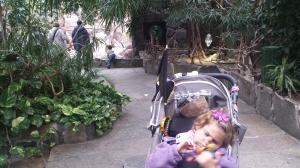 dyreparken høsten 2014 178