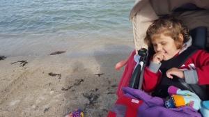 For kaldt i vannet i Norge så her kan Emily kose seg i vogna, hvertfall enn så lenge...Men snart skal hun uti den spanske varmen og vannet!